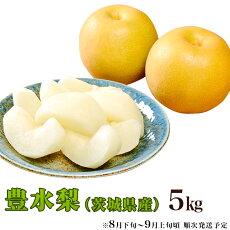 【ふるさと納税】11-4茨城県産「豊水梨」5kg