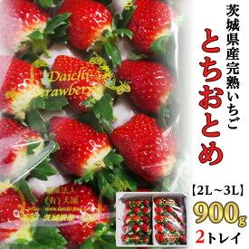【ふるさと納税】34-5茨城県産完熟いちご「とちおとめ」【2L~3L】900g(2トレイ)