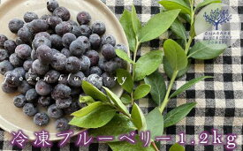 【ふるさと納税】冷凍ブルーベリー 1.2kg 【08219-0046】