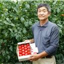 【ふるさと納税】根本さん家のこだわりフルーツトマト