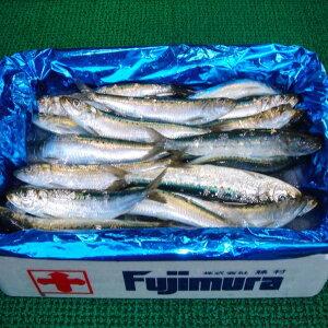 【ふるさと納税】朝獲れ直送!鮮度抜群の獲れたて鮮魚 5kg 神栖市 茨城県 送料無料