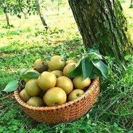 【ふるさと納税】行方で育ったおいしい梨 幸水5kg