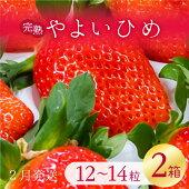 【ふるさと納税】【2021年2月発送】甘〜い!いちごやよいひめ12粒〜14粒入り2箱