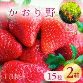 【ふるさと納税】【2021年1月発送】爽やかな甘味!いちご(かおり野)15粒入り2箱