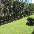 【ふるさと納税】☆鹿島アントラーズ練習場で使用の芝生50平方メートル