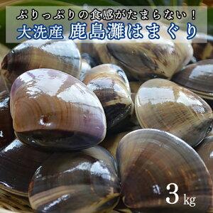 【ふるさと納税】 大洗産鹿島灘天然はまぐり 3kg 冷蔵 お吸い物 ハマグリ 蛤 貝 砂抜き処理 魚介類 大洗産 天然 はまぐり