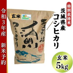 【ふるさと納税】20-20茨城県産コシヒカリ特別栽培米5kg(玄米)【大地のめぐみ】