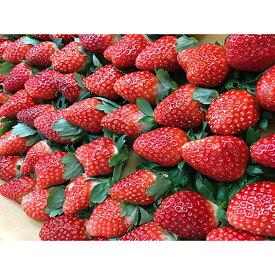 【ふるさと納税】「甘みと酸味の競演 谷中農園のとちおとめ いちご【約280g×4パック】」