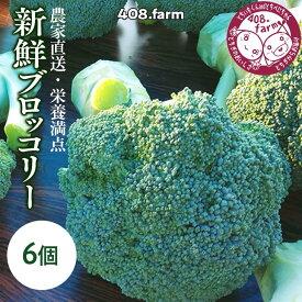 【ふるさと納税】農家直送・栄養満点☆新鮮ブロッコリー!※2021年10月上旬~10月下旬頃に順次発送予定