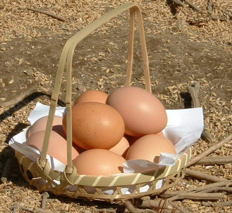 【ふるさと納税】A-11 千代の厳選卵とプリンセット