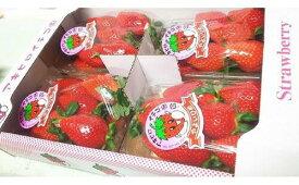 【ふるさと納税】R-21 やよいひめ(群馬県オリジナル品種のイチゴ)約300g×4パック(箱入り)