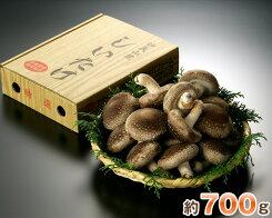 【ふるさと納税】No.002特選菌床生椎茸約700g(箱入り)