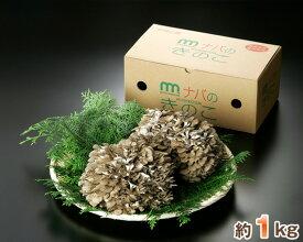 【ふるさと納税】No.170 特選舞茸 約1kg(箱入り) / キノコ きのこ マイタケ まいたけ 群馬県
