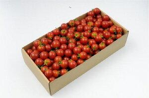 【ふるさと納税】【1】ミニトマト1kg