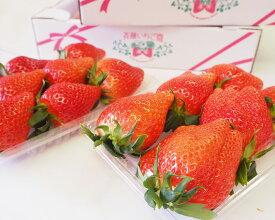 【ふるさと納税】No.082 群馬のいちご「やよいひめ」約270g×4パック / イチゴ 苺 安心 安全 フルーツ 果物