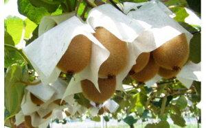 【ふるさと納税】キウイフルーツ 4kg(山下果樹園)