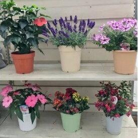 【ふるさと納税】J-1 季節の鉢花「おまかせセット」