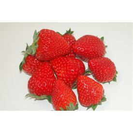 【ふるさと納税】いちご「4パック」(品種おまかせ)「日本農業賞」大賞受賞の農園が生産