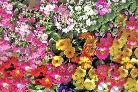 【ふるさと納税】[年3回定期便] 季節の草花 詰め合わせ[0134]