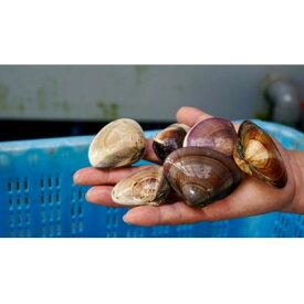 【ふるさと納税】≪千葉ブランド水産物認定品≫九十九里産蛤 約6.2kg/65〜90個【1134298】
