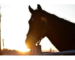 【ふるさと納税】No.069<土日祭日><マンツーマンレッスン付き>体験乗馬1名様分/千葉県