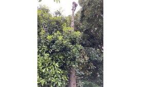 【ふるさと納税】君津市木こり商会木の伐採作業高さ7メートル未満1本