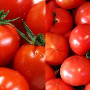 【ふるさと納税】\まるでフルーツ!/【朝どり直送】高糖度トマト&ミニトマト「宝玉丸」2.4kg【4月発送分】