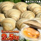 漁師直送!富津産活ホンビノス貝2.5kg(Lサイズ)