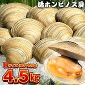 漁師直送!富津産活ホンビノス貝4.5kg