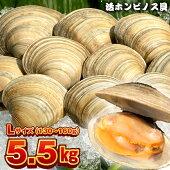 漁師直送!富津産活ホンビノス貝5.5kg