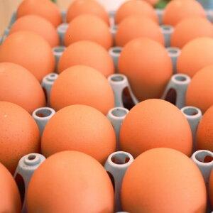 【ふるさと納税】《定期便》 今井の卵 30個 《12ヵ月毎月お届け》 薬品無添加 安心安全 餌と飼育環境こだわりの赤卵 産地直送 産みたて玉子 新鮮卵 卵かけご飯 玉子焼き 『甘さとコクが自慢
