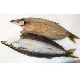 【ふるさと納税】地魚厳選 特カマスひらき 5651-0640