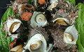 5651-0001【ふるさと納税】磯の香り抜群!房州さざえ2kg(10〜15個入り)