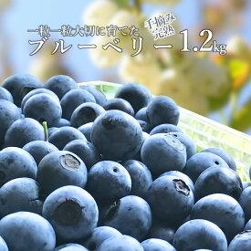 【ふるさと納税】 ブルーベリー 生 1kg超 送料無料 完熟 手摘み ちばエコ農産物