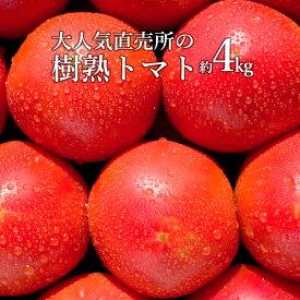 【ふるさと納税】 トマト 4kg 樹熟 人気 直売所