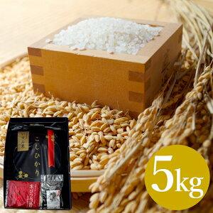 【ふるさと納税】 米 5kg 送料無料 コシヒカリ こしひかり 令和2年産 白米 5キロ
