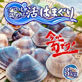 【ふるさと納税】 訳あり はまぐり ハマグリ 蛤 国産 天然 送料無料 3kg 千葉県産 九十九里産