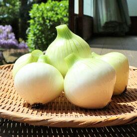 【ふるさと納税】白子町産の新玉ねぎ10kg