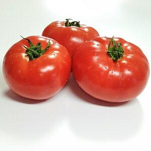 【ふるさと納税】長生トマト8kg