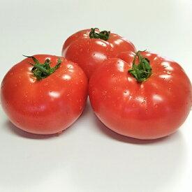 【ふるさと納税】【10月10日より順次発送】長生トマト4kg