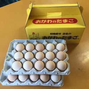 【ふるさと納税】相模原市田名のおがわのたまご ピンク卵(Lサイズ)30個