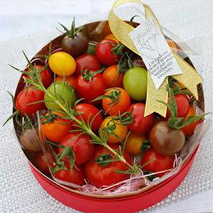 【ふるさと納税】【井出トマト農園】トマトの宝石箱 【野菜・ミニトマト】