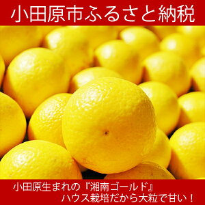 【ふるさと納税】神奈川生まれの柑橘 ハウス栽培の湘南ゴールド