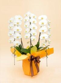 【ふるさと納税】《お花の回数券シリーズ》トップフローリスト厳選の胡蝶蘭3本立ちの回数券×5枚