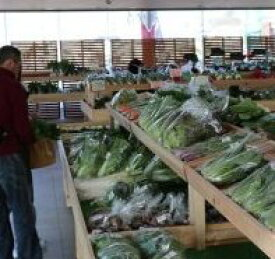 【ふるさと納税】1-22産直センターうらりマルシェ  三浦野菜詰め合わせ
