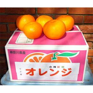 【ふるさと納税】オレンジ「小林紅柑」 1箱【1076850】