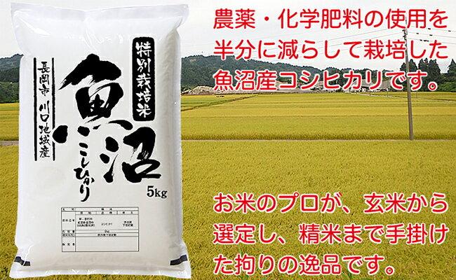 【ふるさと納税】1-330 特別栽培米 新潟県魚沼産コシヒカリ(長岡川口地域)5kg