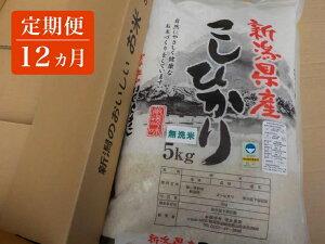 【ふるさと納税】 定期便 12ヵ月 新潟のおいしいお米 無洗米 コシヒカリ 5kg を毎月1袋お届け 【 白米 新潟県 柏崎市 】