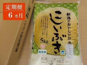 【ふるさと納税】定期便 6ヵ月 新潟のおいしいお米 こしいぶき 無洗米 こしいぶき 5kg 毎月1袋お届け 【 白米 新潟県 柏崎市 】