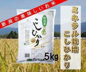 【ふるさと納税】ミネラル栽培こしひかり 5kg